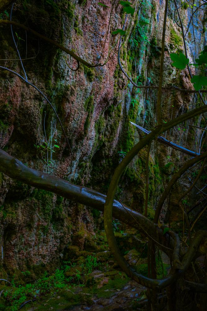 Pared húmeda por donde discurre el agua que se cuela por las paredes rocosas en el bosque encantado de las higueras en la ribera del cauce del río Guadalentín a su paso por el Paraje natural de Peralta, situado en el término municipal de Pozo Alcón en la provincia de Jaén(España)